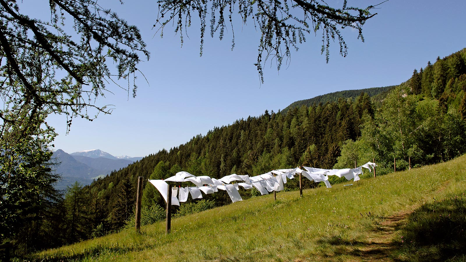 some clothes on a wire on a meadow of Hotel Briol in Barbiano during summer